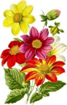 El lenguaje de las flores.