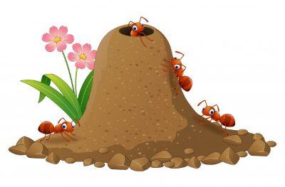 La hormiga de la casita de chocolate.