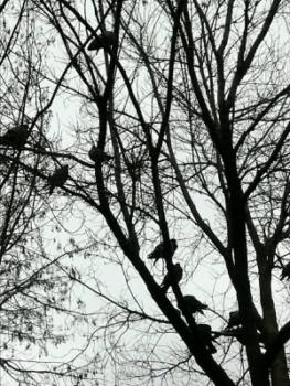 Los pájaros.