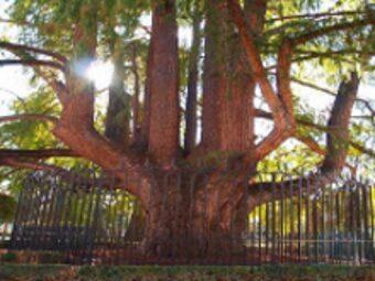 El árbol encantado del Retiro.